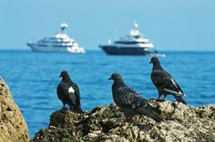 3 голубя на предпосылке моря Стоковое Изображение