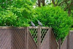 2 голубя ослабляют на загородке внешней Стоковые Изображения RF