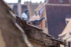 2 голубя садились на насест на крыше таунхауса Стоковые Фото