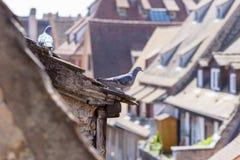 2 голубя садились на насест на крыше таунхауса Стоковое Изображение