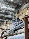 2 голубя голубя сидят под мостом Стоковые Изображения RF