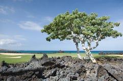 гольф Гавайские островы курса стоковая фотография rf