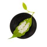 Гомеопатическая концепция с листьями Стоковые Фото