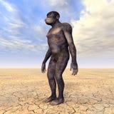 Гомо Habilis - эволюция человека Стоковое фото RF