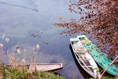 Гонка воды утки Стоковые Изображения