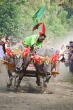 Гонка коровы Бали традиционная Стоковое фото RF
