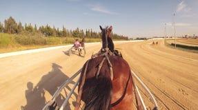 Гонка колесниц 019 проводки лошади Стоковые Изображения RF