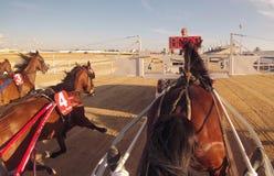 Гонка колесниц 011 проводки лошади Стоковые Изображения RF