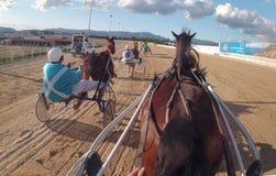Гонка колесниц 019 проводки лошади Стоковое Изображение RF