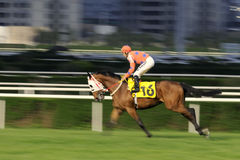 гонка лошади отделки Стоковые Изображения