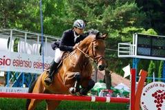 гонка лошади скача Стоковое фото RF