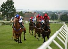 гонка лошади Стоковая Фотография RF