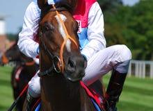 гонка лошади york Стоковые Фото