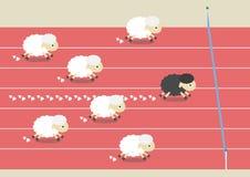 Гонка овец Стоковое фото RF