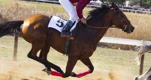 гонка лошадей лошади проводки округляя поворот 3 Стоковая Фотография RF