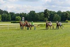 гонка лошадей лошади проводки округляя поворот 3 Стоковое фото RF