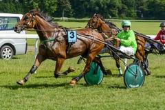 гонка лошадей лошади проводки округляя поворот 3 Стоковые Фото