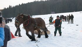 Гонка лошадей проекта Стоковая Фотография