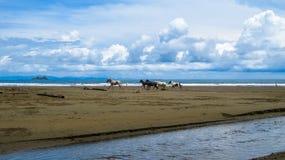 гонка лошади одичалая Стоковая Фотография