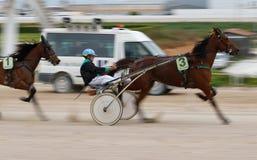Гонка проводки лошади sulky в ипподроме Palma de Mallorca готовя широко стоковое изображение rf