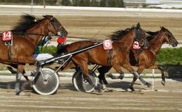 Гонка проводки 017 лошади Стоковые Фото