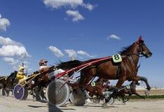 Гонка проводки 013 лошади Стоковое Изображение RF