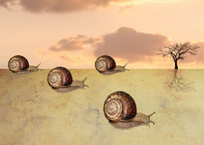 Гонка пустыни улиток Стоковые Фотографии RF
