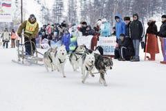 Гонка собаки скелетона Камчатки Русский Дальний восток, Kamchatsky Krai Стоковое Изображение RF