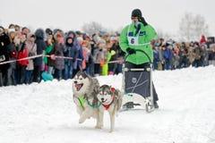 Гонка собаки скелетона на снеге в зимнем дне Стоковые Изображения