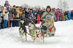 Гонка собаки скелетона на снеге в зимнем дне Стоковое Фото