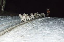 Гонка собак проекта Стоковое Изображение