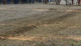 Гонка тележки вола в маленьком городе Nagaon около Alibaug в махарастре Индии сток-видео