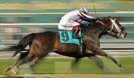 гонка шеи лошади Стоковое Фото