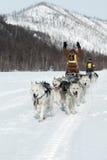 Гонка Beringia розвальней собаки Камчатки весьма Россия, Дальний восток Стоковые Изображения RF