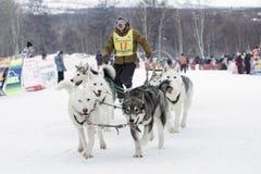Гонка Beringia скелетона собаки Камчатки Россия, Дальний восток Стоковые Фото