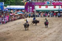 Гонки буйвола фестиваля Стоковое Изображение