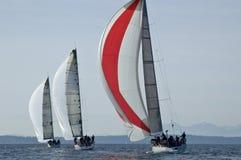 Гонки парусника на заливе Shilshole, Сиэтл, штате Вашингтоне Стоковые Изображения