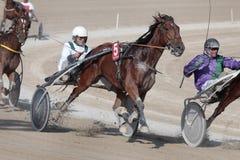Гонки проводки лошади Стоковая Фотография