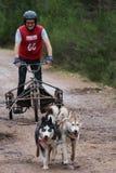 Гонки скелетона собаки стоковые фотографии rf