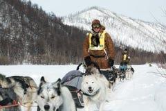 Гонки собаки скелетона Beringia Камчатки весьма Россия, Дальний восток Стоковое Изображение