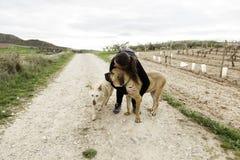 Гончая собака обнимать женщины Стоковая Фотография RF
