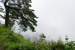 гора ландшафта туманная Стоковые Изображения