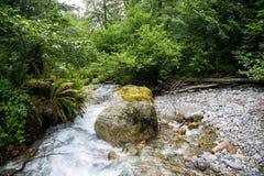 Гора более rvier в лесе гористой местности в абхазии Стоковое Изображение