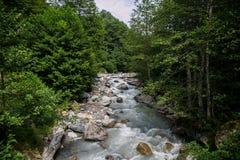 Гора более rvier в лесе гористой местности в абхазии Стоковые Фотографии RF