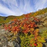 Гора в осени Стоковая Фотография RF