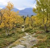 Гора в осени Стоковые Изображения RF