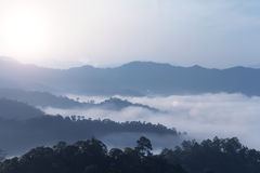 Гора в тумане леса Стоковые Изображения