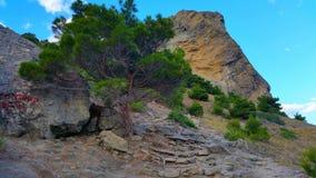 Гора & дерево Стоковые Изображения RF