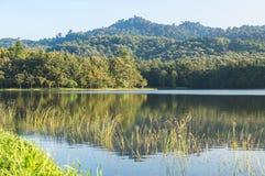 Гора леса пруда Стоковые Фото