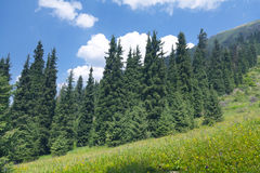 Гора лета ландшафта природы дерева стоковые изображения rf